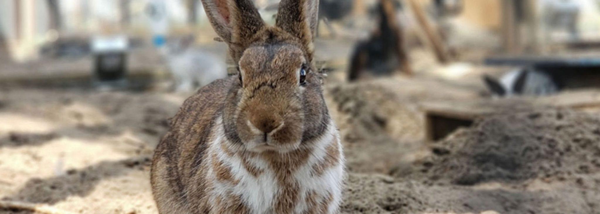 Bunny 101 Raising Rabbits Maizey Meadows